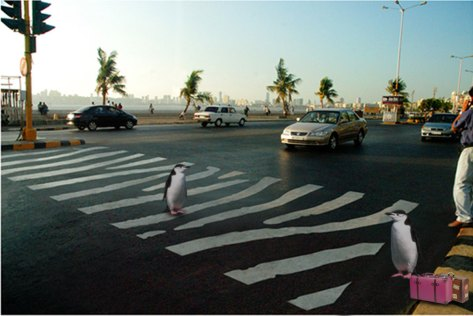 News-Alert-4---Zebra-Crossing
