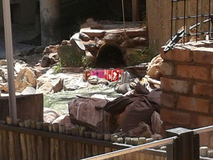 Zoo-Photo-Suitcases-Alert-1