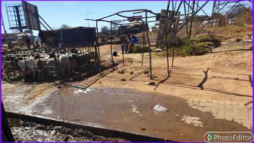 Elias Motsoaledi informal settlement